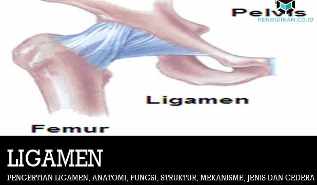 pengertian-ligamen